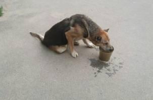 По микрорайону Смоленска ползала собака с простреленными лапами