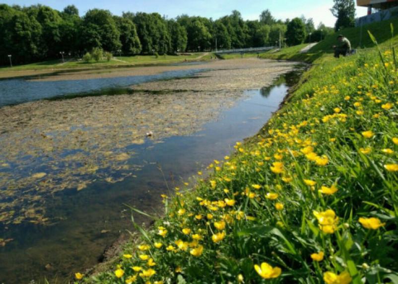 «Снимет любую хворь»: в смоленском пруду растет «волшебная» трава