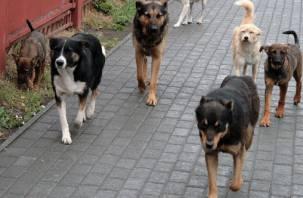 «Не кормите собак!» В Смоленске свора псов напала на ребенка