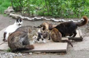 В Смоленске состоится благотворительная акция в помощь животным