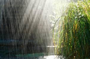 В столице обещают +30, а в Гадюкино опять идут дожди