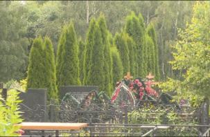 Смоленский бездомный продавал краденые растения с кладбищ и дач