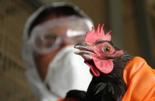 Прогноз неутешителен: на Смоленщине выявлен высокопатогенный грипп