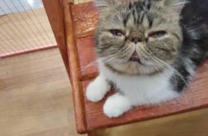 «Сидят в собственных фекалиях»: смоляне в шоке от замученных кошек на выставке