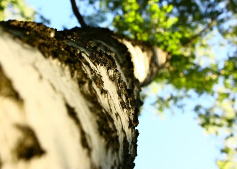 Деревья всё падали и падали. Здоровая ветка едва не раздавила автобус