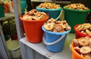 Смолянам не рекомендуют собирать грибы в ведро
