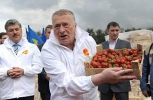 Жириновский принес в Госдуму 100 кг «футбольной» клубники