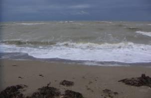Черное море стало коричневым из-за плавающих фекалий