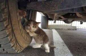 Животные Смоленска стали прятаться под автомобилями