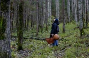Смоленские поисковики нашли плутавшую в лесу три дня женщину