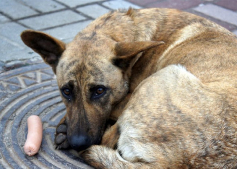Приют для животных выживает из последних сил: в Смоленске идет срочный сбор