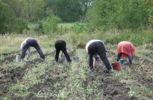 Сажать нельзя выкопать: в Россельхознадзоре прокомментировали информацию о запрете сажать картошку