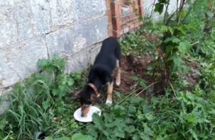В Смоленске возле крепостной стены бросили привязанного щенка
