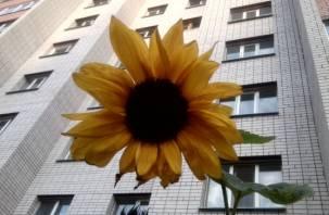 В Смоленской области девочка выпала из окна пятиэтажки