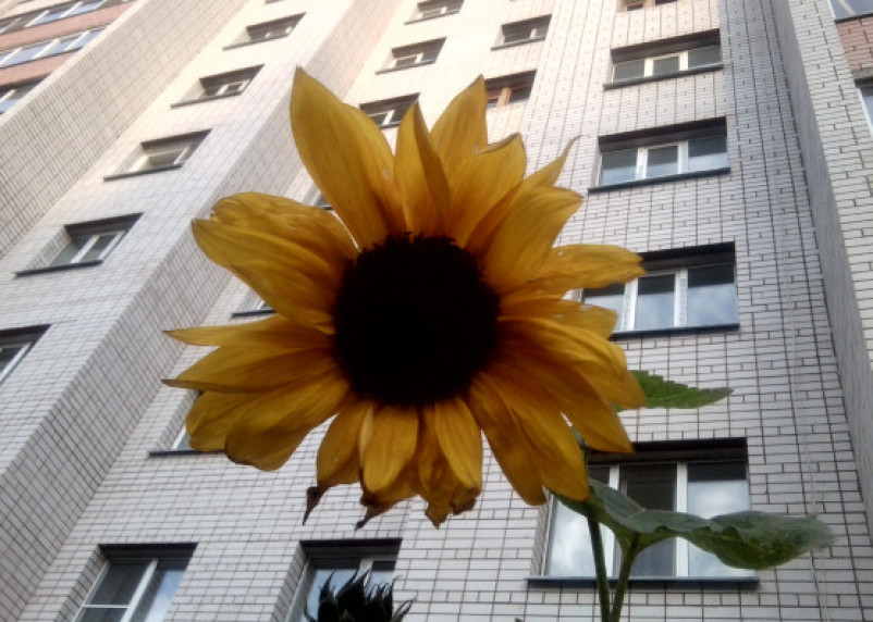 В Смоленске из окна пятого этажа выпал мужчина