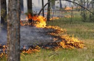 В Велижском районе горит лес