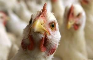 Птичий грипп распространяется на Смоленщине