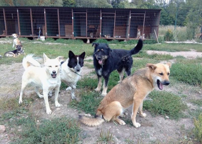 Социальные сети: В Смоленске хотят отстреливать собак