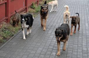 На смолянку набросилась свора бездомных собак