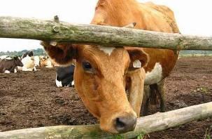 Трое смолян украли корову и жестко разделались с ней