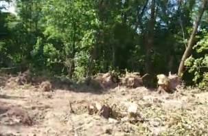 «Строитель от ЛДПР» допиливает смоленский лесопитомник
