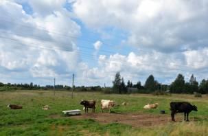 В Демидовском и Монастырщинском районах ввели карантин по бешенству