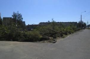 В Смоленске происходит масштабное уничтожение зеленых зон