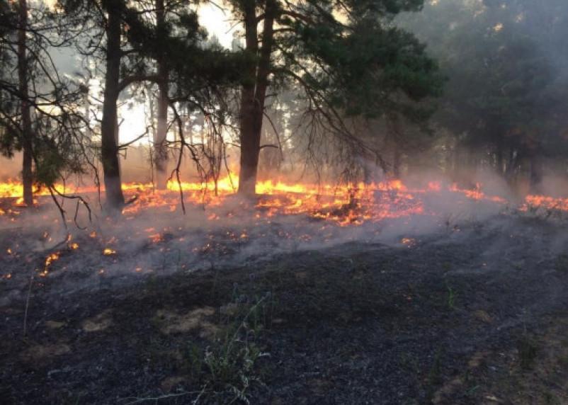 В смоленских лесах всплеск возгораний. Объявили пожароопасный сезон с 1 апреля