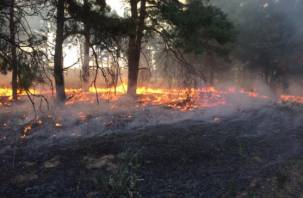В Смоленской области ликвидирован серьезный лесной пожар