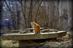 Лакомство для кошек не прошло проверку смоленского Россельхознадзора