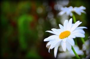 В Смоленске определен список мест, где можно купить цветы к 8 марта