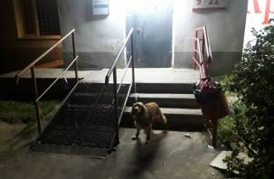 В Ярцеве хозяева привязали собаку к перилам на улице и ушли
