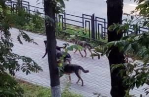 Смоляне боятся стаи собак, разгуливающей по улице Кирова