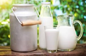 «И напился и полечился»: в российском молоке нашли антибиотики