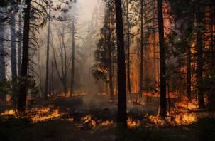 На Смоленщине повысился уровень пожарной опасности в лесах