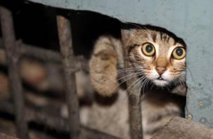 В Смоленске пройдет благотворительная акция помощи бездомным животным