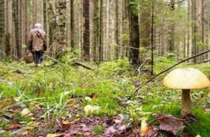 В смоленском лесу пропал грибник
