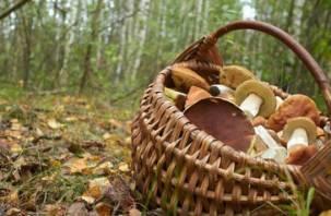Пропавший под Смоленском грибник найден мертвым