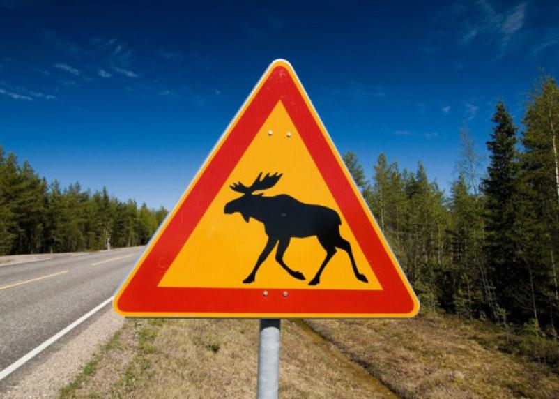 В Смоленской области участились ДТП с дикими животными