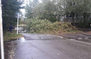 «Проезд заблокирован». В Смоленске дерево рухнуло посреди дороги