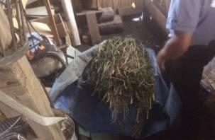 Смолянин может лишиться свободы на десять лет за хранение «отравы»