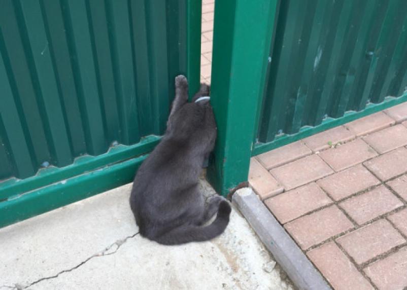 В Смоленской области застрявший в воротах кот погибал несколько часов