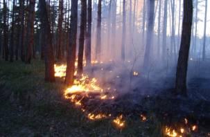 Пожарные назвали виновников возгорания в Ершичском лесу