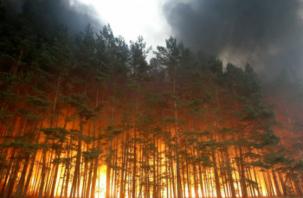 Пожарные вовремя остановили огонь в смоленском лесу