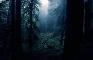 Двое мужчин пропали в смоленском лесу
