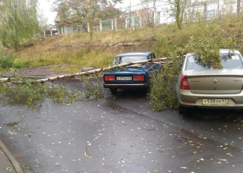 Сильный ветер в Смоленской области валит деревья на машины и дороги