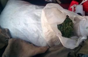 Двое смолян выращивали в лесу марихуану и торговали ею