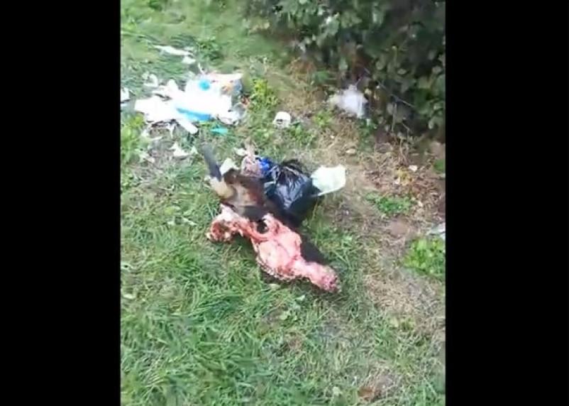 «Жесть». В Смоленске на детской площадке лежит отрубленная голова