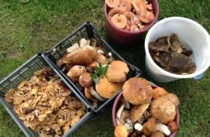 В России сбор грибов и ягод могут взять под контроль