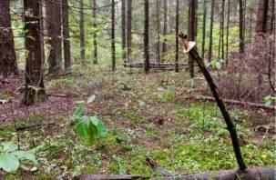 Стала известна судьба пропавшего в лесу смоленского грибника